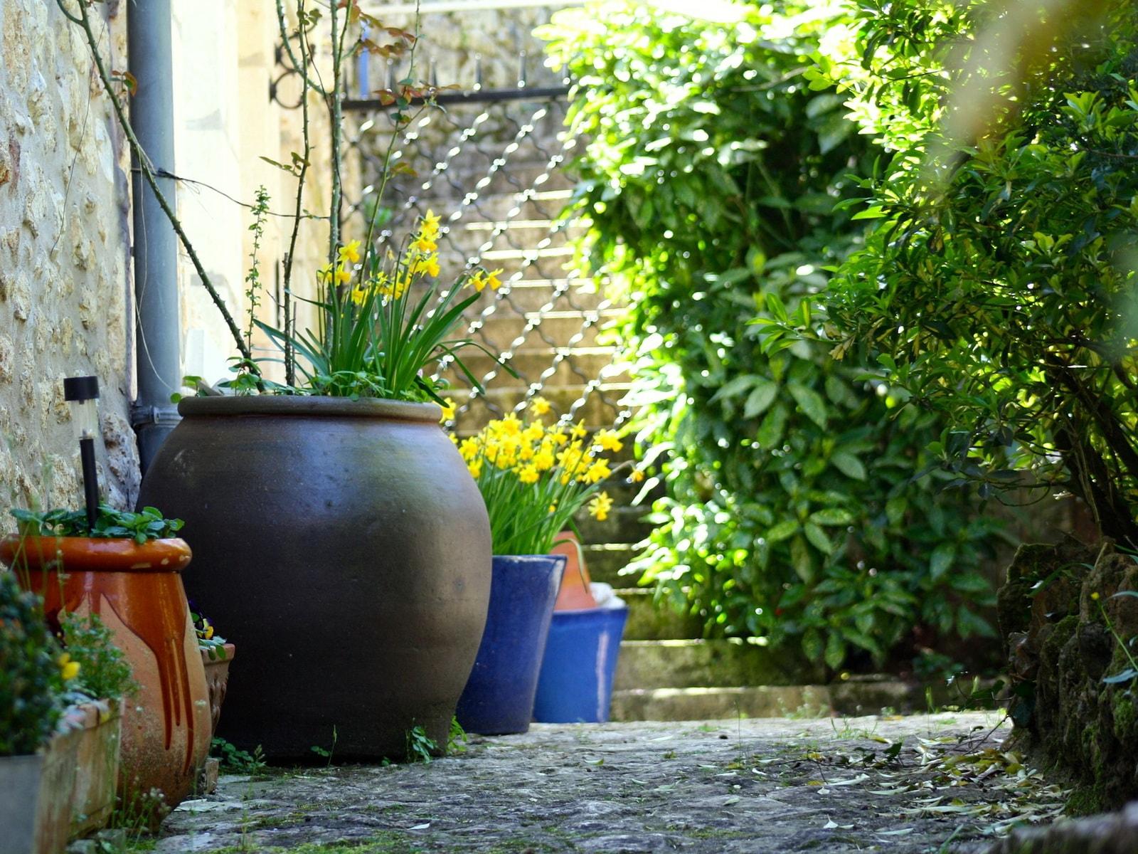 Какие растения можно посадить в тени