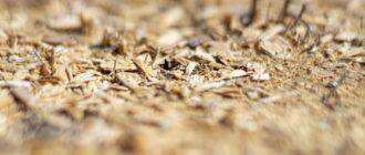 Как использовать опилки в качестве органического удобрения для грядок