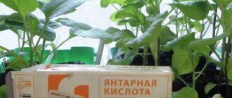раствор янтарной кислоты для полива рассады (рецепт)